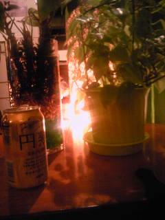 缶ビールは缶で飲む
