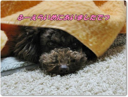 001_20110304182123.jpg