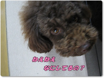 001_20110307183104.jpg