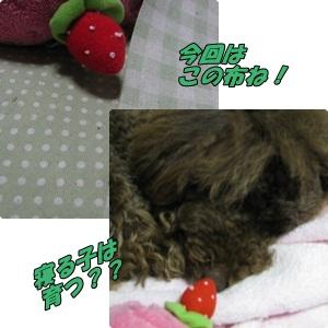 006_20110417190641.jpg
