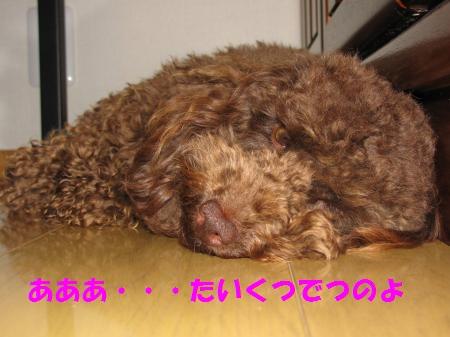 006_convert_20100529165111.jpg
