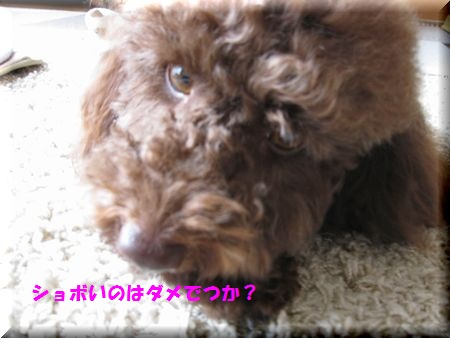 01_20101207163140.jpg