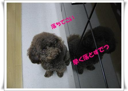 01_20110111133906.jpg