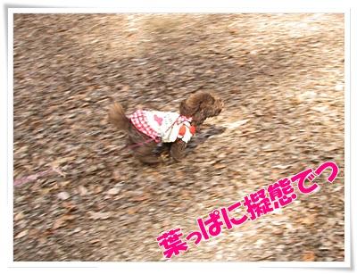 01_20110124230634.jpg