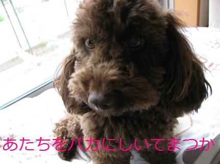021_convert_20100518183455.jpg
