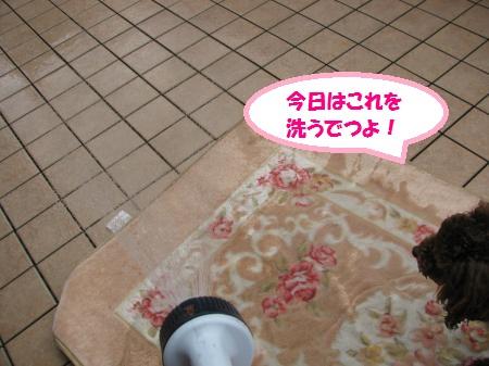 022_convert_20100630124838.jpg