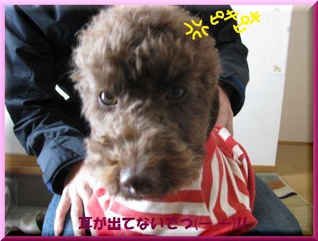 02_20101129131452.jpg