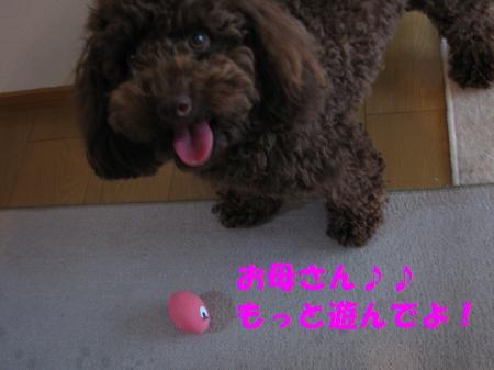 045_convert_20100610183654.jpg