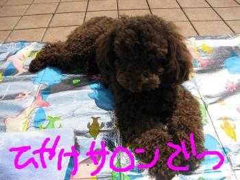 050_convert_20100515201846.jpg