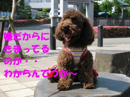 057_convert_20100608081027_20100608093751.jpg