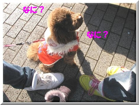 1_20110107190704.jpg