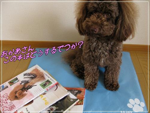 1_20110704151446.jpg