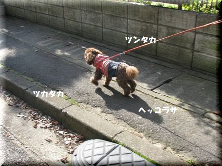 2_20101105145006.jpg