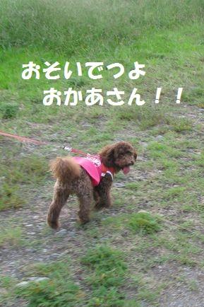 6_20101013202818.jpg