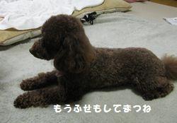 6_20101028191644.jpg