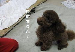 7_20101028191654.jpg