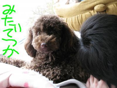 snap_denden0225_201046154155.jpg