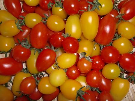 彩りトマト