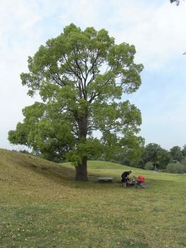 大きな木の下でピクニック