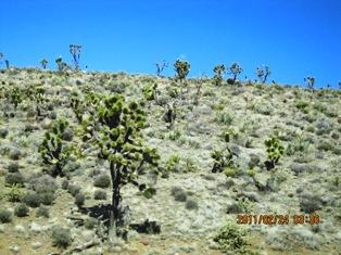 Mojave-6a.jpg