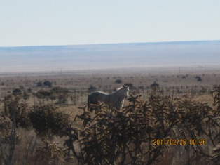 Ranch2a.jpg