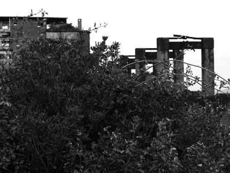 軍艦島24草とコンベア