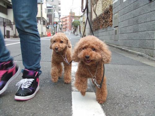 お散歩クッキー&友