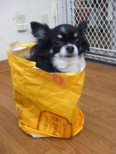 マロニーin紙袋