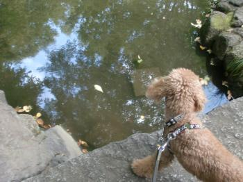 池とボー君