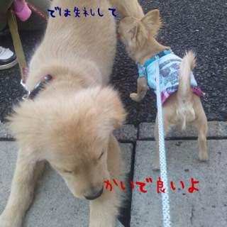 photo_20130306104508.jpg