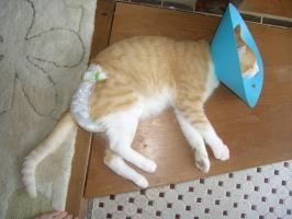 エリマキ猫