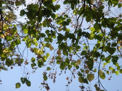葉の裏側から