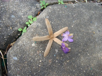 ペトレア 中の小花と