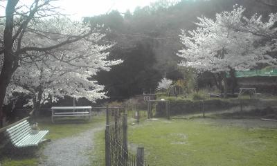 桜のベンチ
