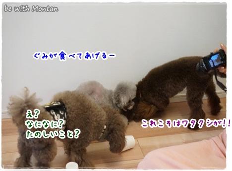 DSC09672-20141025A.jpg