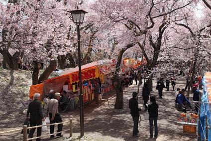 高遠城址公園 桜と屋台