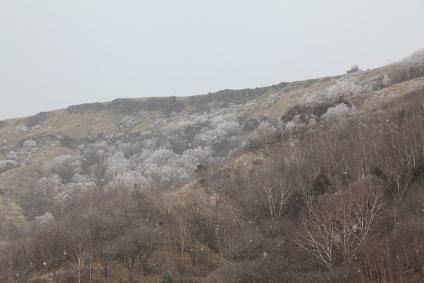 雪降るヴィーナスライン