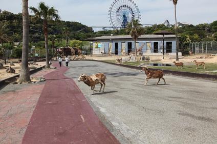 サファリ ウォーキング中 動物が道路を渡る