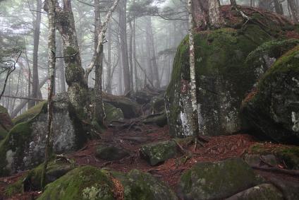 苔生す編笠山への道