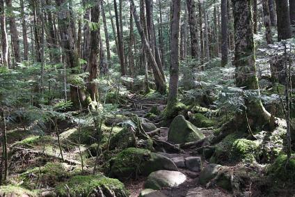 苔生す丸山への登山道
