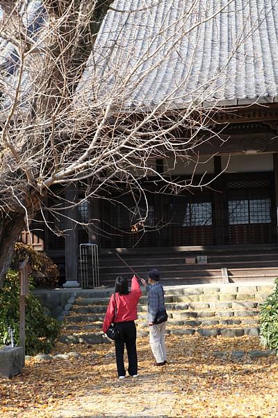祖父江町 銀杏はすっかり葉が落ちて。。。