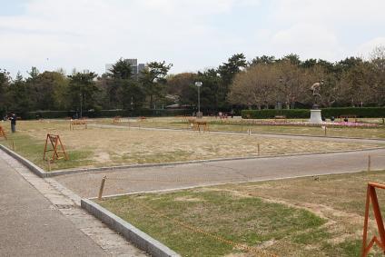 鶴舞公園 チューリップがあるはずの花壇