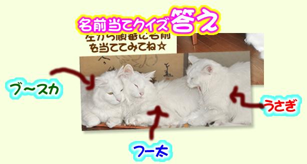 kotae