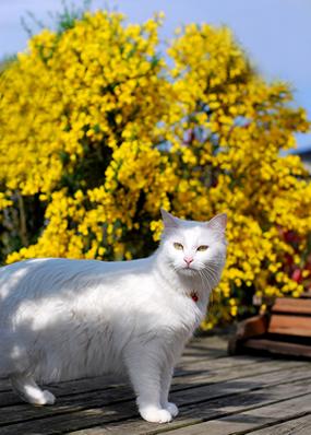 うさぎと黄色い花