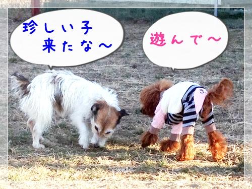 2013_01_11_03.jpg