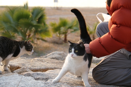 愛され猫1