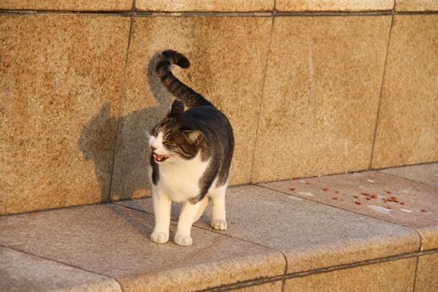 六甲猫・香露園浜1月2日 102