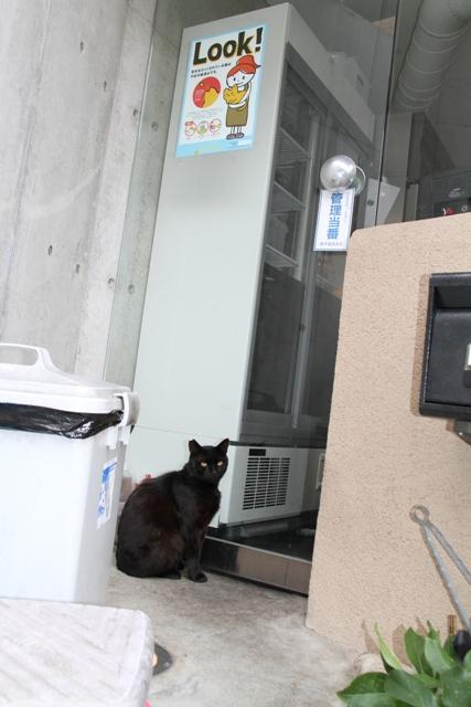 みみ先カット黒猫 011