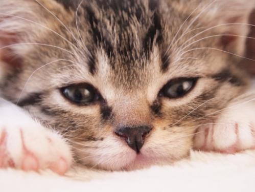 Img1401_cat_big.jpg