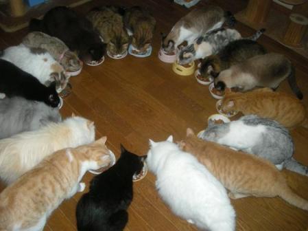 Img1431_cat_big.jpg